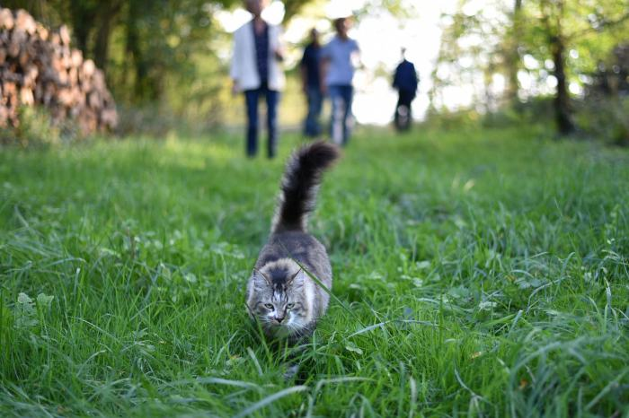Chamalow the cat escapes from his neighbours for some peace and quiet